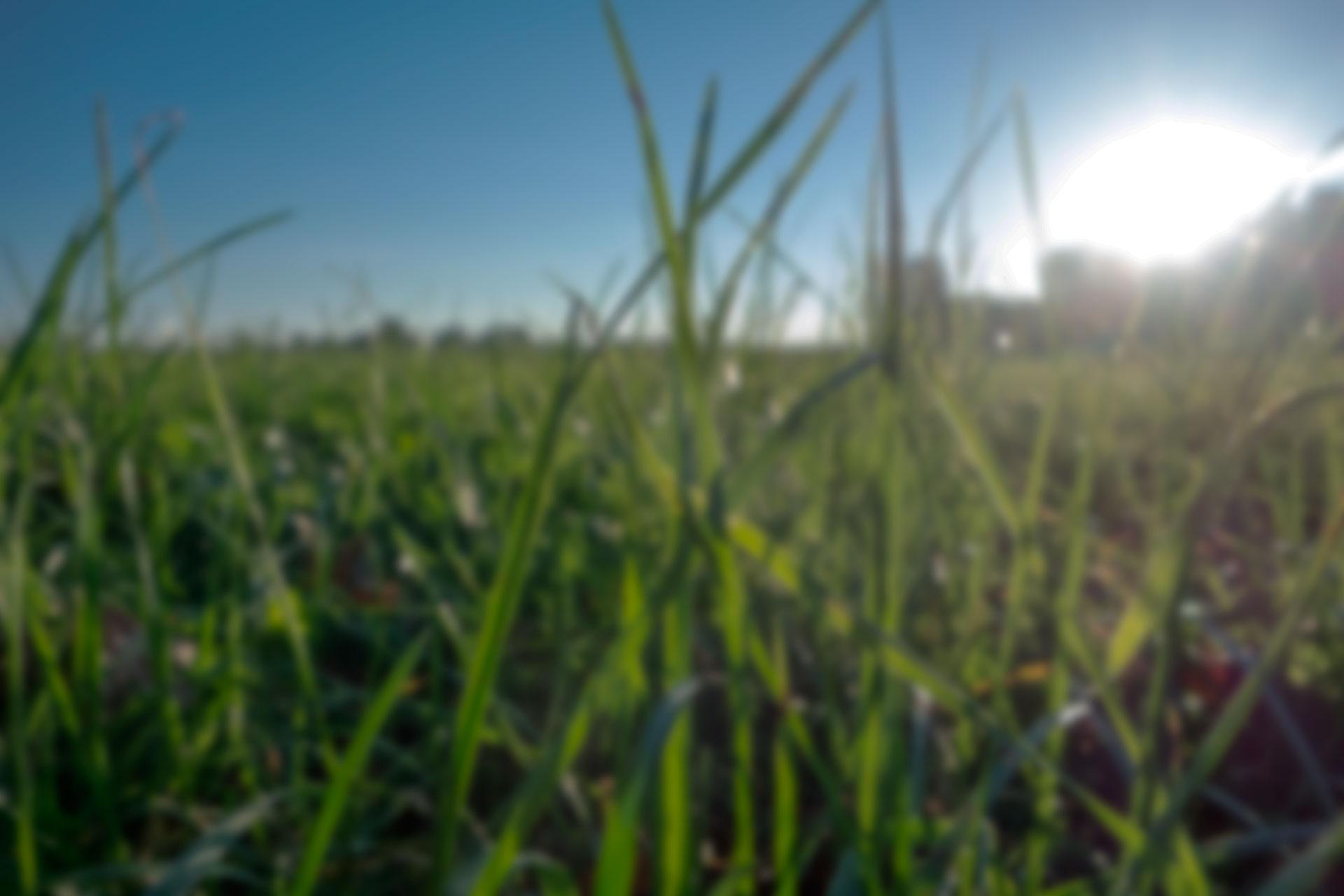 grass-638123