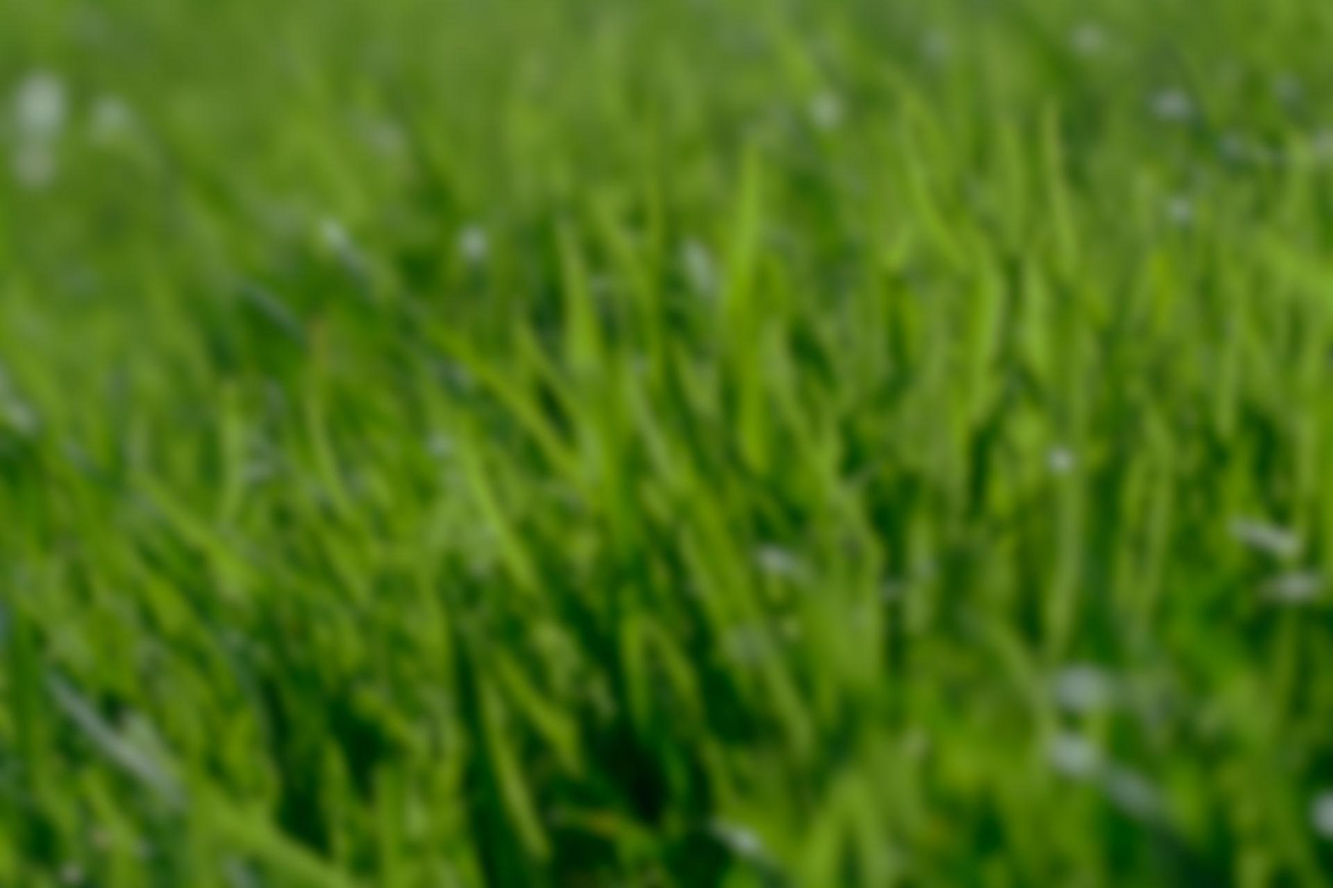 grass-6662841