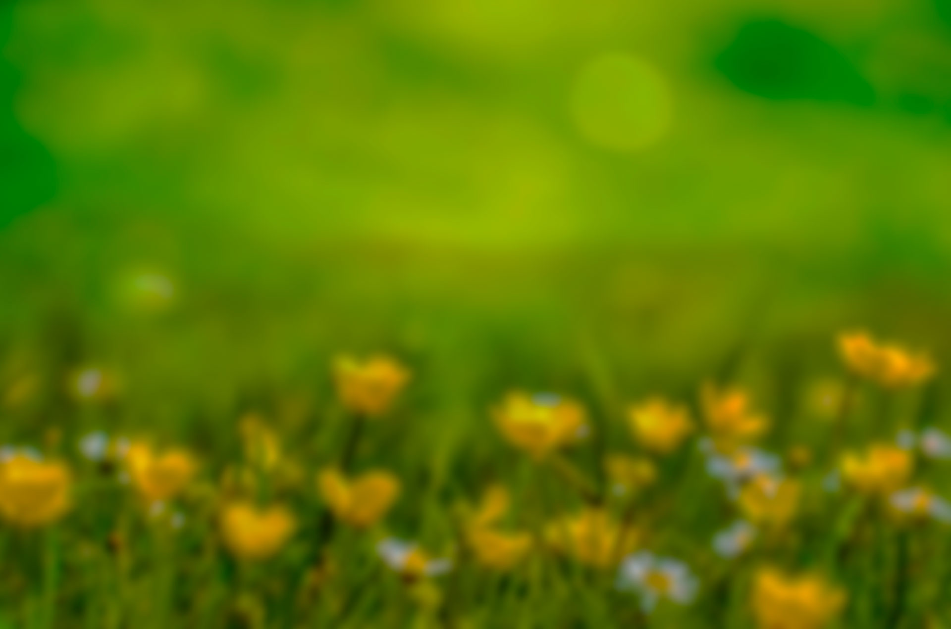spring-316535